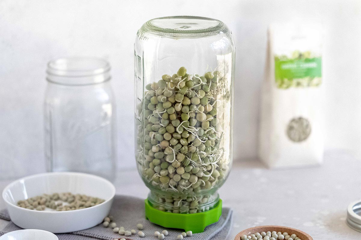 Cell Garden Sprossenglas  | 950 ml