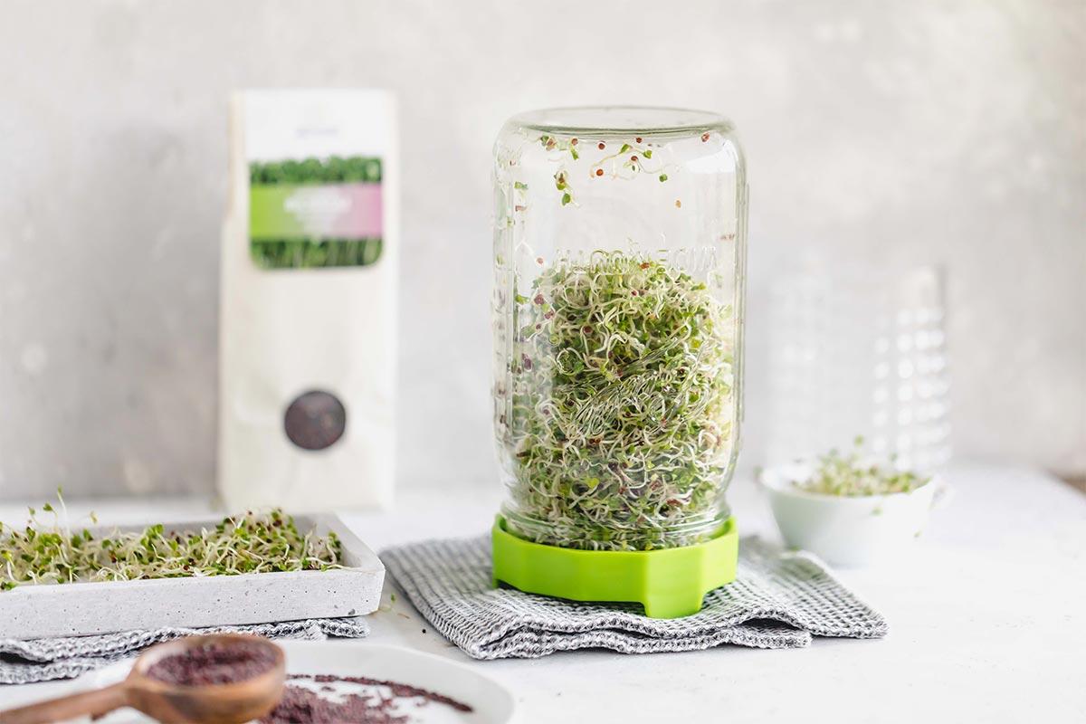 Bio-Keimsaat Brokkoli | 200 g